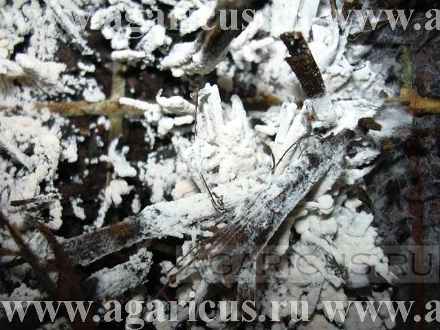 White plaster mold