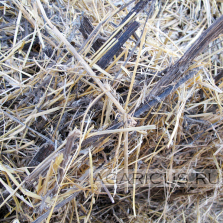 To make high quality compost from this straw is a challenge for good technologist