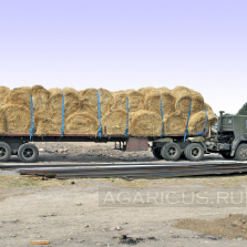 Straw rolls transporting