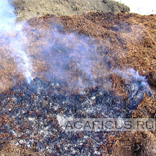 Spontaneous combustion of chicken manure on straw