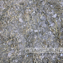 Chicken manure to chopped straw,on floor growing hens, with automaticaly leaking nippless