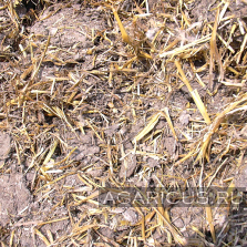 Chicken manure on chopped straw, on floor growing hens , good quality